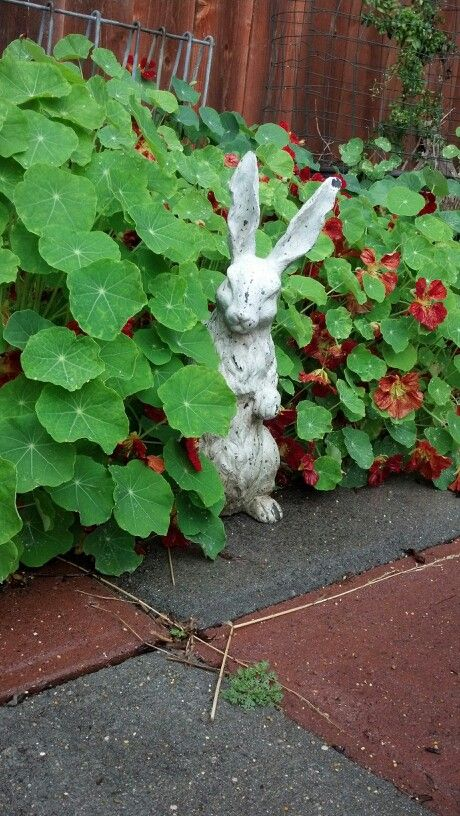 Sneaky bunny!