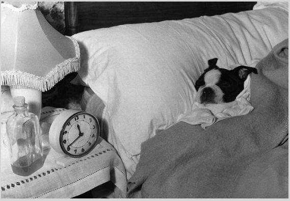 rimedi per l'insonnia e per dormire bene <<<http://tormenti.altervista.org/rimedi-per-insonnia/