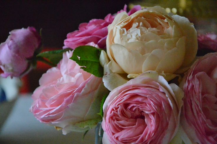 rose#roses#rosa#rose#colourpower#flowerpower#www.cbiancadellabbadessa.it