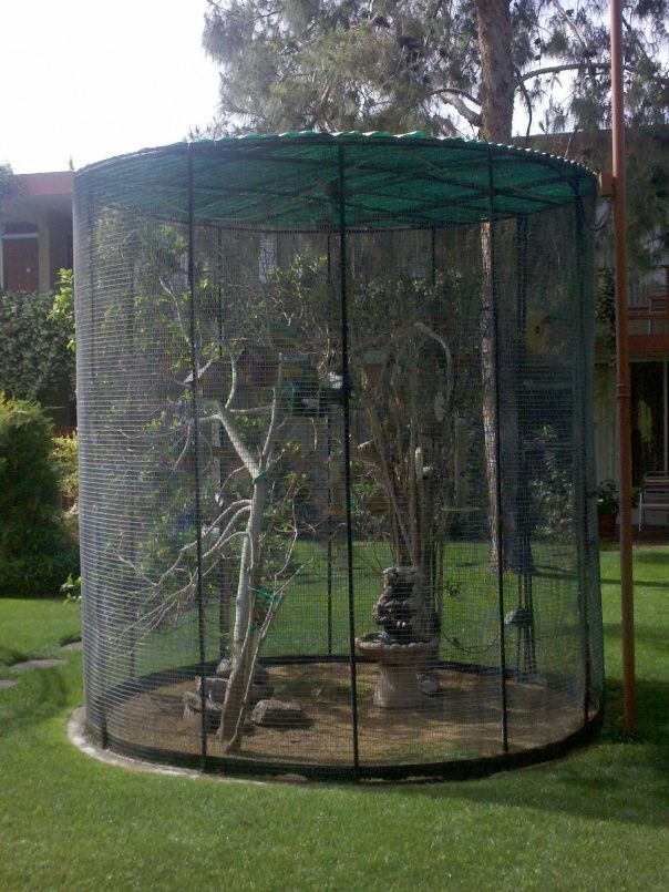Great idea for pet birds in a location where they should be.