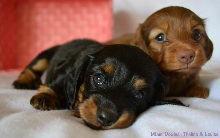 Photograph Whoever said you can't buy happiness forgot little puppies. ~Gene Hill by Steph N on 500px