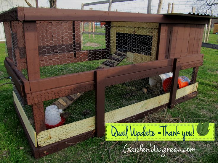 Modifications to my quail set up!  A good post for those wanting to raise smaller birds.  GardenUp green