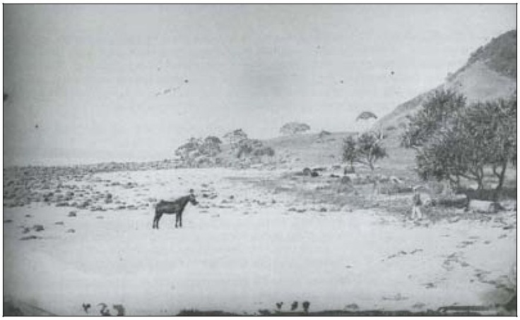 Burleigh Point in 1871. #goldcoast