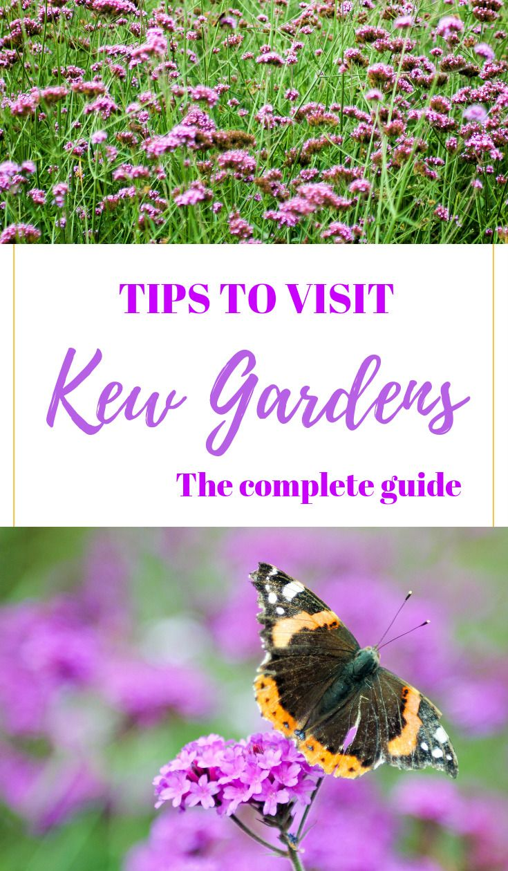 05d7283232a1dd68bbb6c915e98bb4d5 - Best Day To Visit Kew Gardens