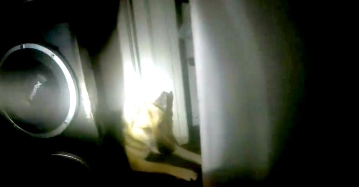 Watch What Happens When A Helmet Cam Captures The Rescue Of A Dog Stuck Inside A House Fire. AMAZING!