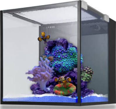 cheap small saltwater tank