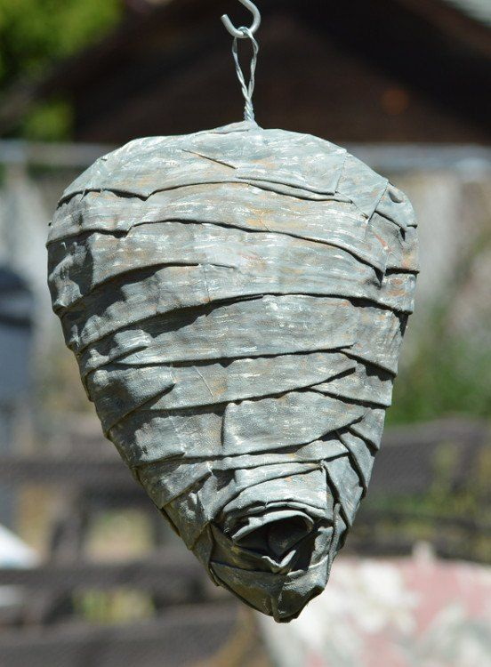Best 25 Wasp Nest Ideas On Pinterest Wasp Insects And