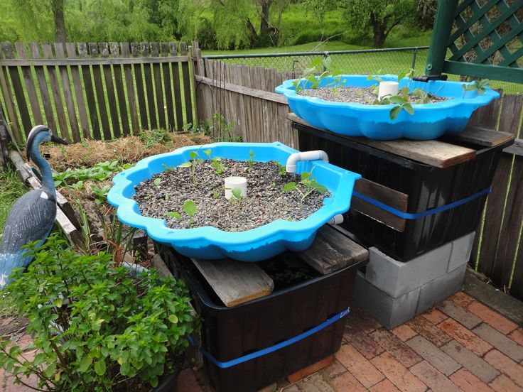 87 best aquaponics images on pinterest aquaponics for Arizona aquaponics