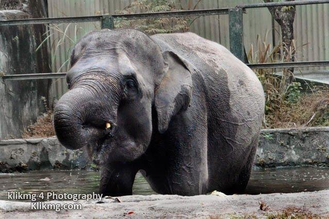 blog.klikmg.com - Rias Pengantin - Fotografi & Promosi Online : Aneka Fauna ( Hewan ) 26/02/2015 photo by momom da...