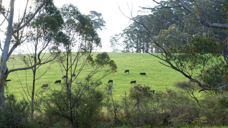 Farmland in Great Southern wine region