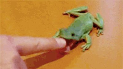The hungry green tree frog. | The 24 Most Important Australian Animal Gifs Of All Time