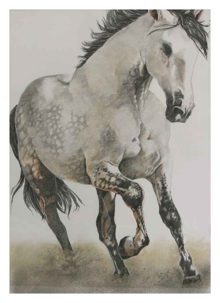 Pferd- Zeichnung- Buntstift