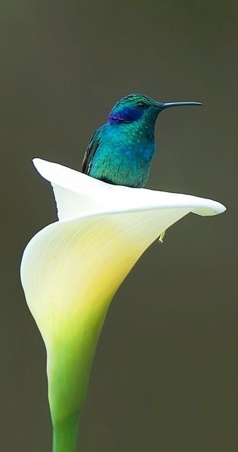 New Wonderful Photos: Gorgeous Bird and Flower