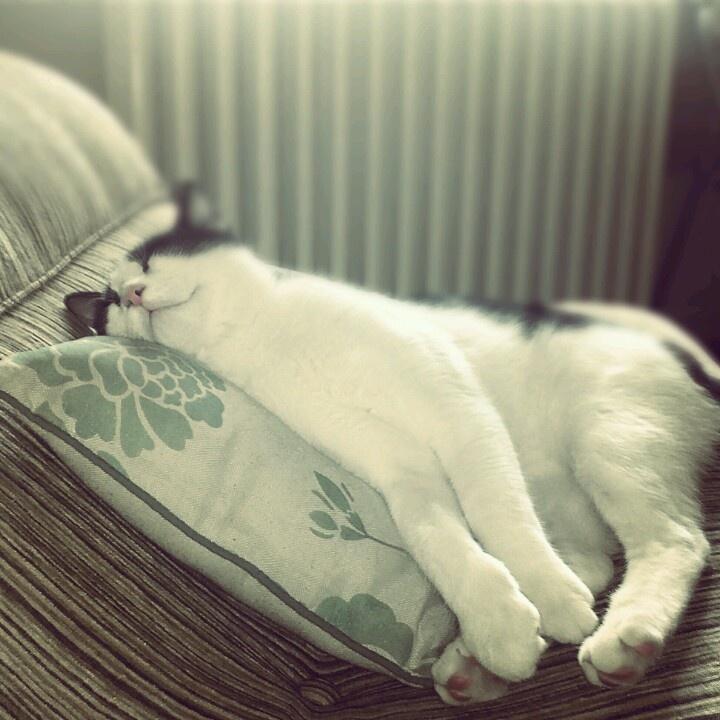 Soft kitty,warm kitty Little ball of fur Happy kitty,sleepy kitty Purr purr purr