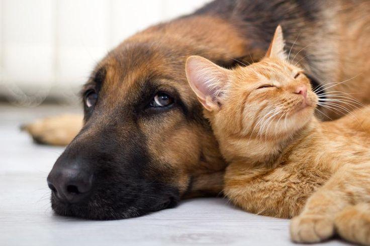 Katzen und Hundeurin entfernen Hund und katze, Hunde
