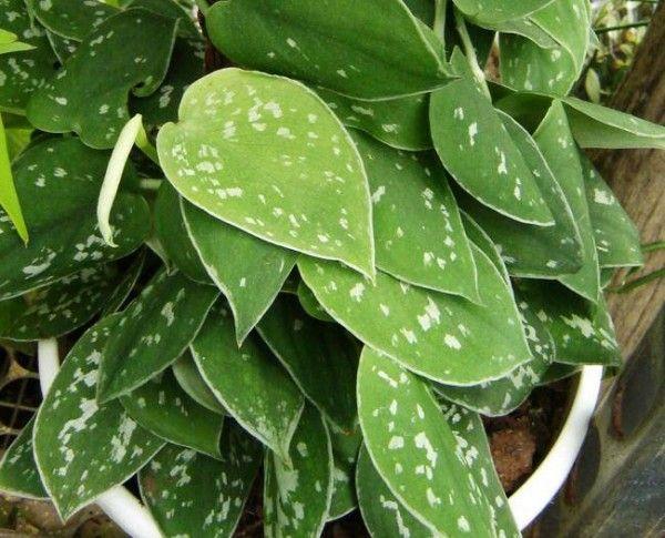 Muitas pessoas acham que ter plantas dentro de casa não é saudável, pois elas são seres vivos como nós e que também expelem gás carbônico. Mas as plantas fazem a fotossíntese e neste processo sobra oxigênio o qual, retorna ao ambiente, nos...