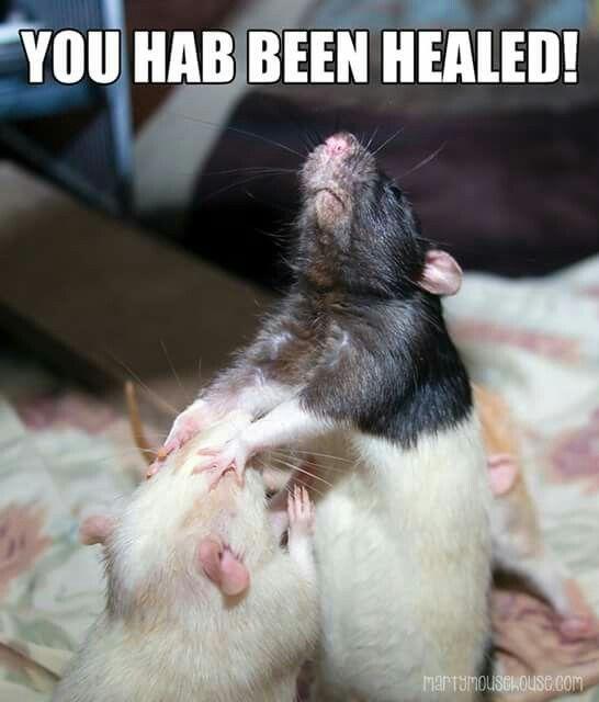 45 Best Rat Memes Images On Pinterest Rats Funny Pets