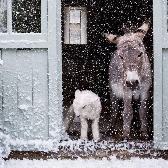 PetsLady's Pick: Funny Disappointed Donkey Of The Day  ... see more at PetsLady.com ... The FUN site for Animal Lovers