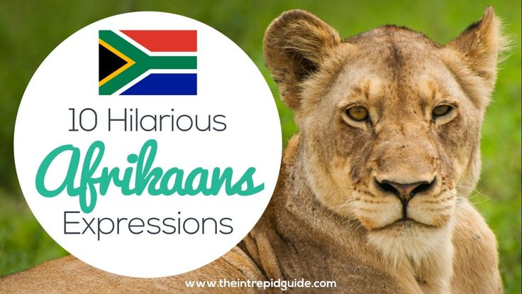 Learn Afrikaans: 10 Hilarious Afrikaans Expressions