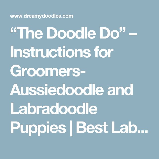 """""""The Doodle Do"""" – Instructions for Groomers- Aussiedoodle and Labradoodle Puppies 