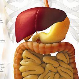 Infografia El cuerpo humano: Sistema digestivo.    nacion.com