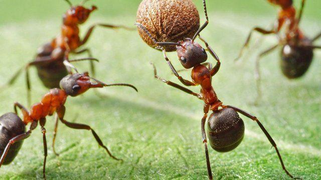 Zatočte s mravcami! Vyskúšajte osvedčené babské rady a zaútočte na ich čuch.