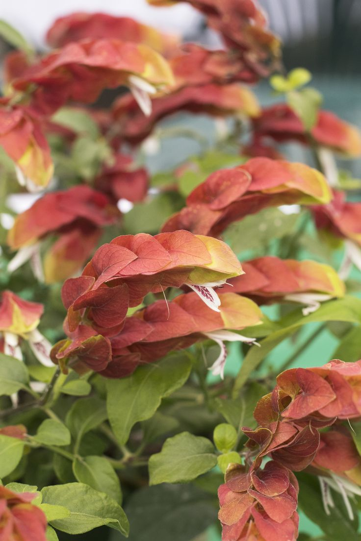 Best 25 Plant Catalogs Ideas On Pinterest Painted Light