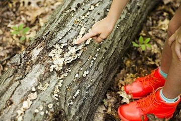 How Parents Can Share Their Children's 'Wildhood': Great tips and ideas on how to recapture the independence and magic of childhood play, and how you can share in this joy.