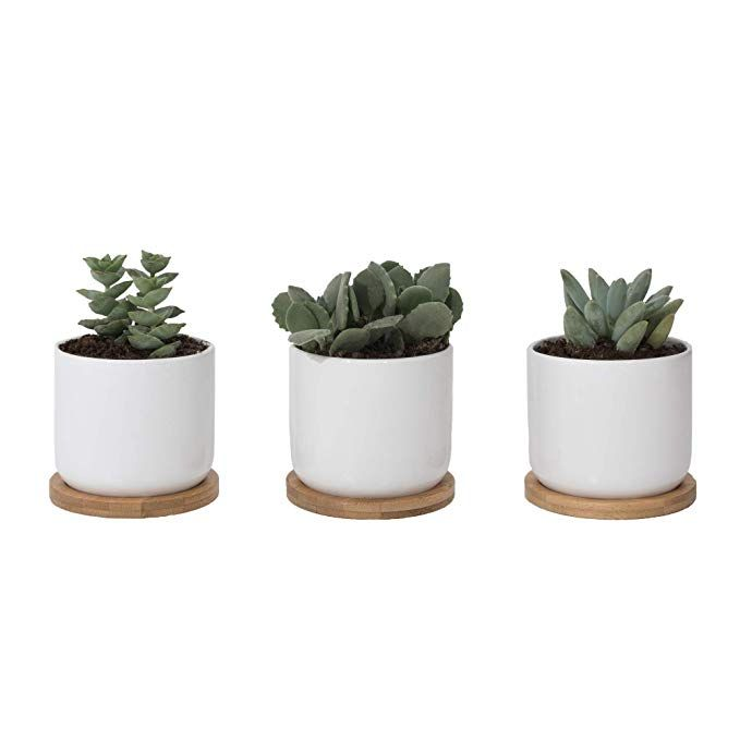 White Ceramic Succulent Pots With Bamboo Tray Set Of 3 4 Inch Succulent Planter Fits Larger Variety Of Pl Small Potted Plants Small Flower Pots Flower Pots