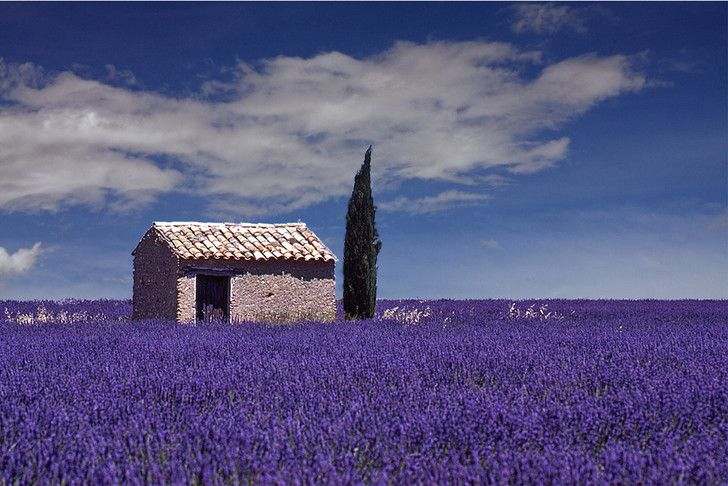 Des vestiges antiques aux Calanques, des champs de lavande aux villages perchés, les merveilles provençales attendent votre visite.