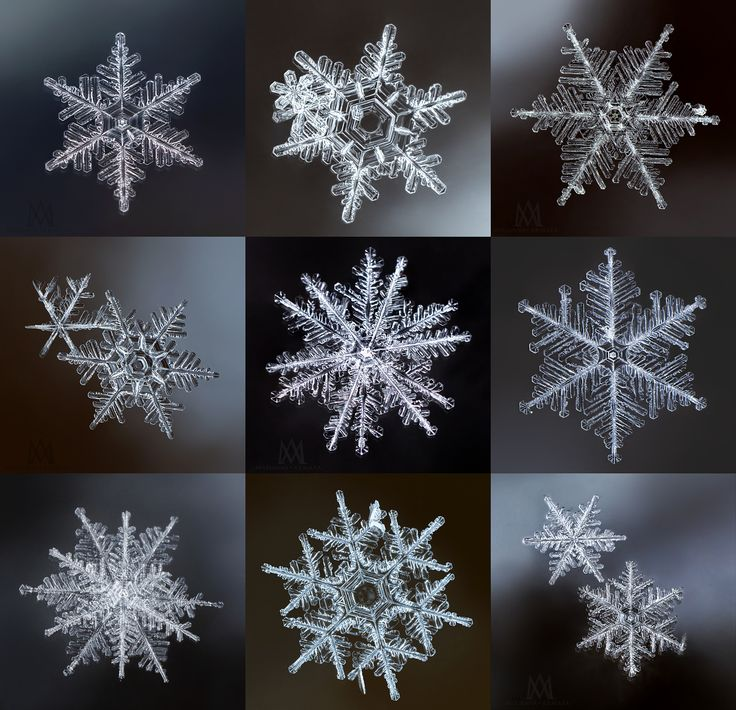 fresh snow - 9 different snowflakes shot with a Panasonic Lumix GH4 + Olympus 60mm macro lens + 2 extension tubes