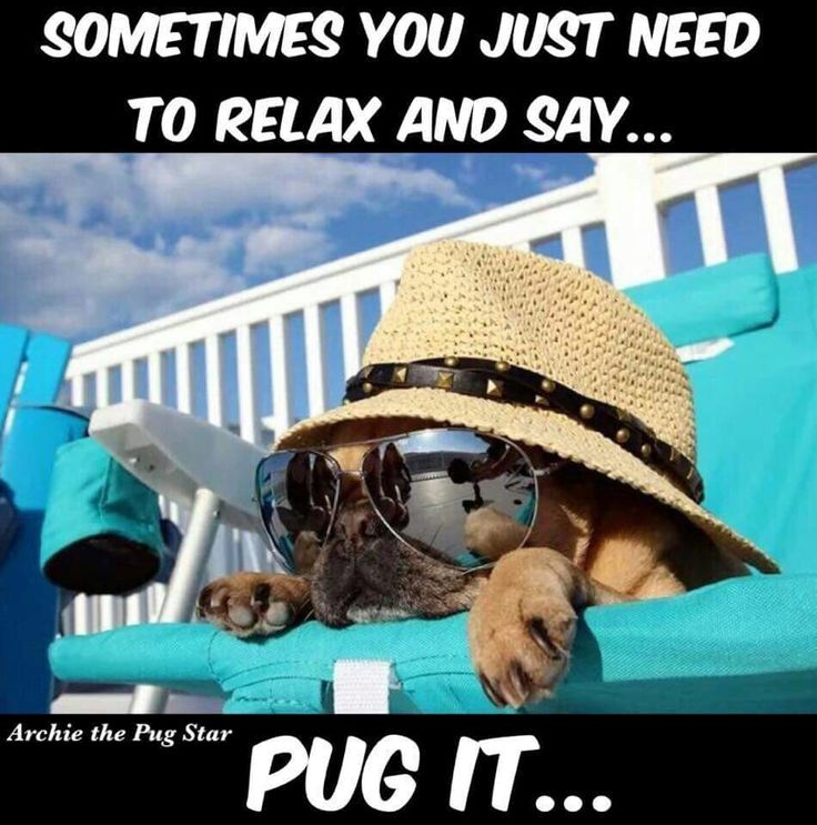 Just pug it #pugs #dogs #retweet #pug #follow #like #puglife #dog #aww #funny #cute #pugchat #fun #Pugs #lol #pets #pugsdaily #humor