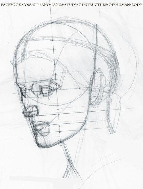 Stefano Lanza Study