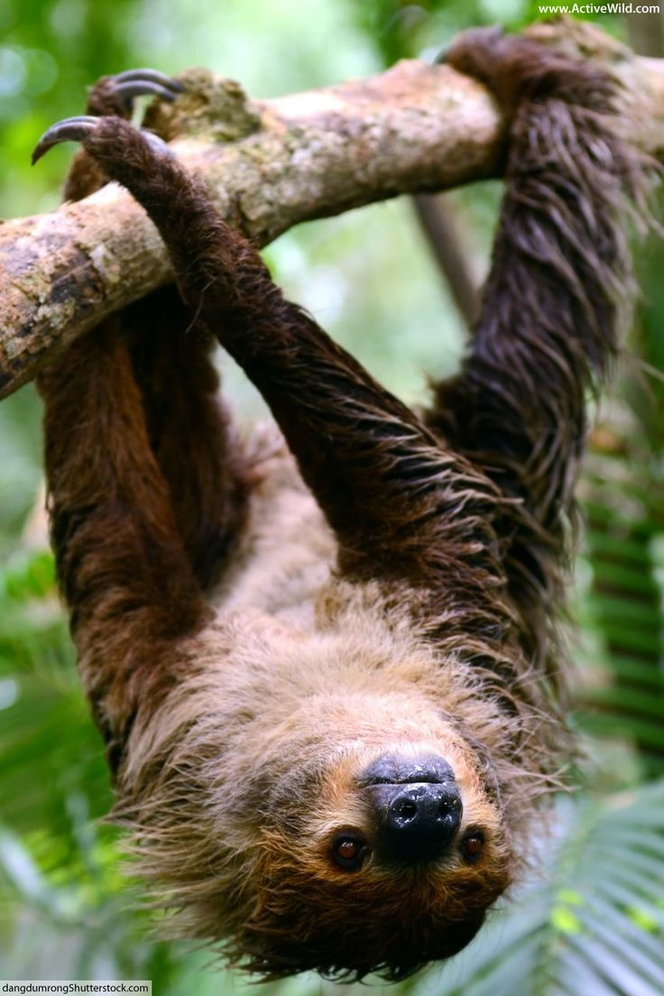 Rainforest Animals List With Pictures, Facts & Links to
