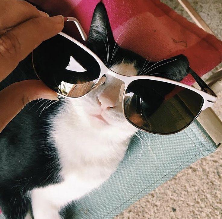 Manapua needed some shade  #suncloud #sunglasses