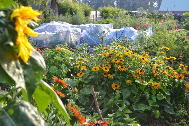 Användbara grönsaker först | Skillnadens Trädgård | Sara Bäckmo