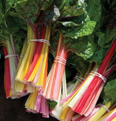 'Bright Lights' Swiss Chard: The gold standard for multicolored Swiss chard. Lightly savoyed, green or bronze leaves with stems of gold, pink, orange, purple, red, and white with bright and pastel variations. Consistent growth rate and strong bolt resistance across all colors makes this a superior mix. Direct seed or transplant to allow separating out the individual colors. Suitable for production year round, but somewhat less frost hardy than normal for chard.