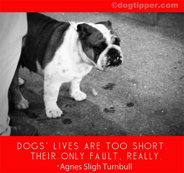 25+ Best Dog Quotes Sad On Pinterest Touching Animal Stories, Sweet Stories.