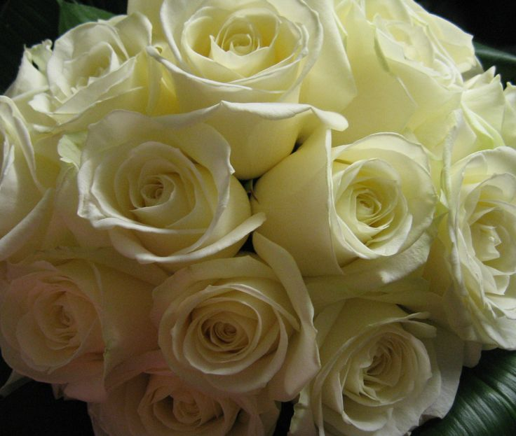 Fresh flower bridal bouquet of white 'avalanche' roses