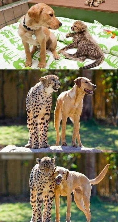 Anyone can be friends :)