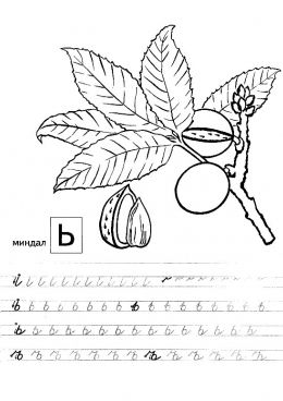 Раскраска Прописи с фруктами Ь