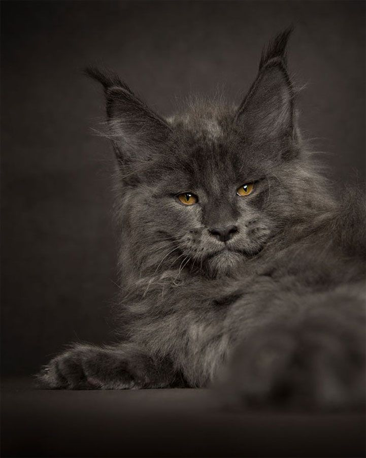 Best Photography Images On Pinterest Arizona Little - This photographer is celebrating stray cats through majestic portrait photographs