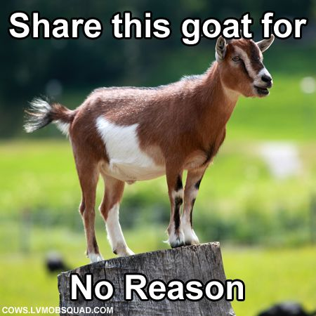 Share this goat for no reason......ok