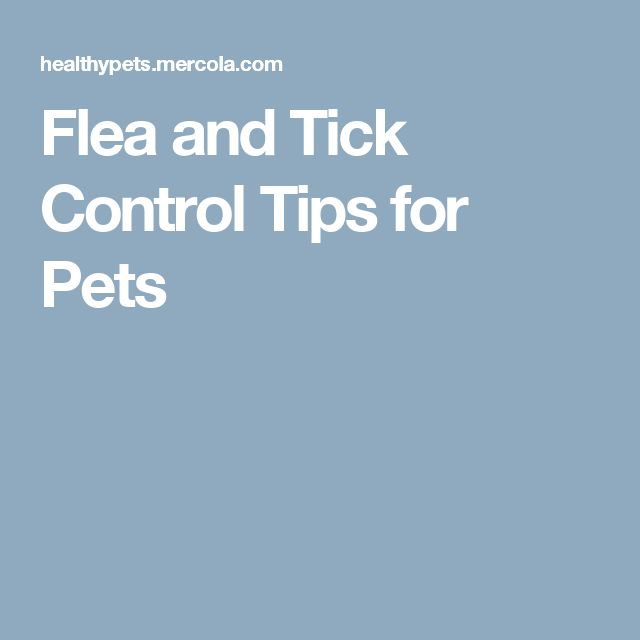 Flea and Tick Control Tips for Pets