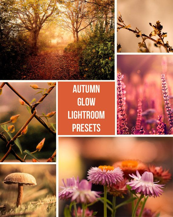 Autumn Glow - Lightroom Presets
