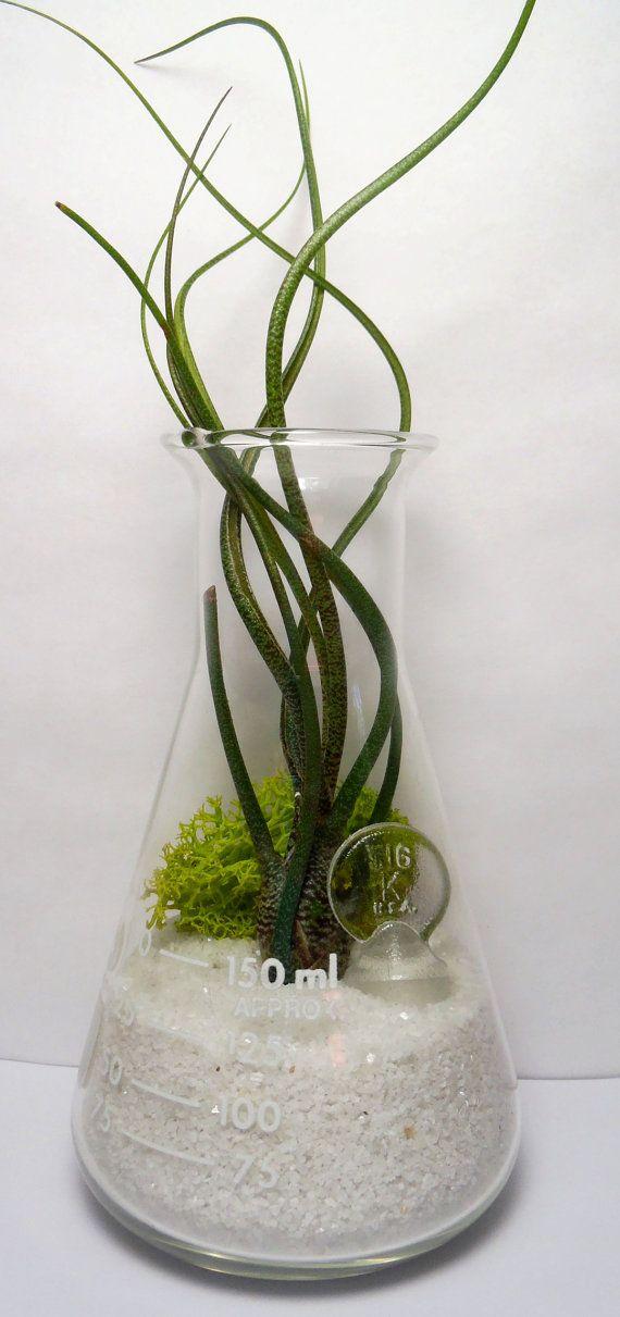 erlenmeyer flask air plant terrarium laboratory flask. Black Bedroom Furniture Sets. Home Design Ideas