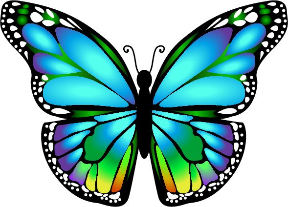 Image result for butterfly images