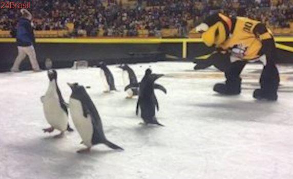 Pinguins são explorados em partida de hóquei para entreter público