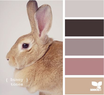 bunny tones: Design Seeds, Colors Palettes, Colors Schemes, Bunnies Tones, Colour Palettes, Bedrooms Colour, Girls Rooms, Colors Inspiration, Colour Schemes