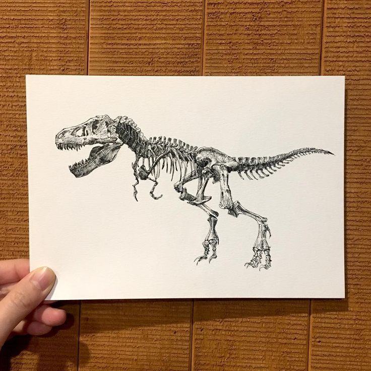 T-rex . . . ⓒ 2017 읏디 all rights reserved. #illustration #illustrator#drawing#pendrawing #picture #art#painting#dino#dinosaur#trex#tyrannosaurus#dinosaurdrawing #skeleton#공룡#티라노사우르스#티렉스#화석#공룡화석#공룡그림#드로잉#펜화#펜드로잉#일러스트#그림#데일리드로잉 http://www.butimag.com/티라노사우르스/post/1468907159818363942_1436966765/?code=BRim0d9AGQm